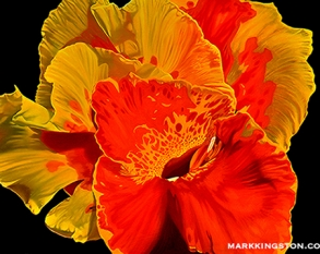 Canna flower 72dpi 7th March 2014 copy