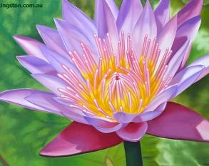 Water Lily DSC_1424 72dpi