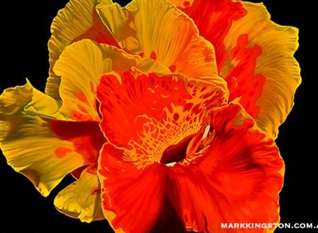 Canna flower 72dpi 6th March 2014 copy